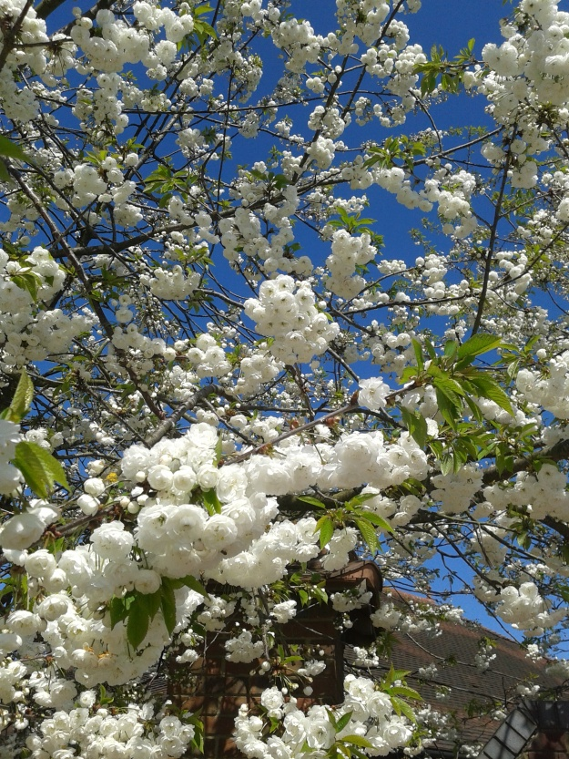 Beautiful blossoms in the service station car park where we stoppped for lunch on our first journey.