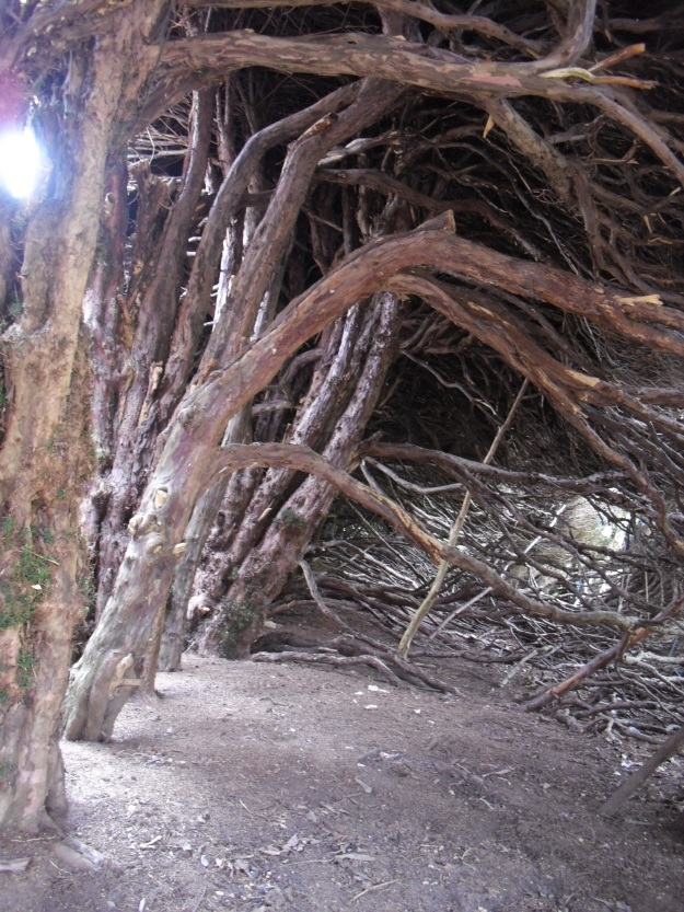 Inside the Yew Hedge at Blicking Hall, Norfolk - who might have hidden here?